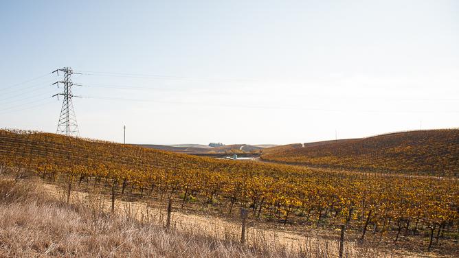 Napa vinyards in winter-0228