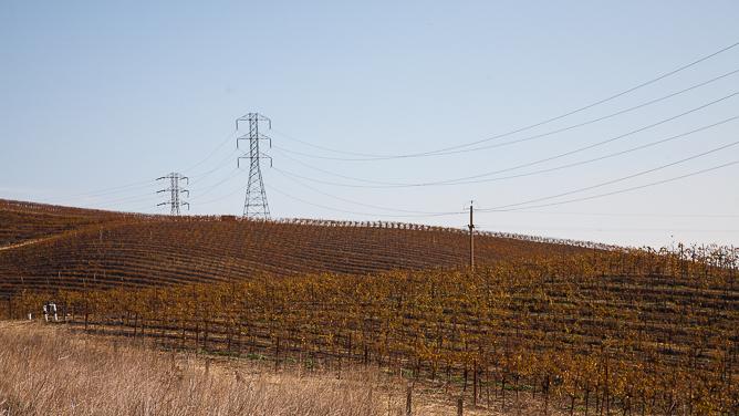 Napa vinyards in winter-0230