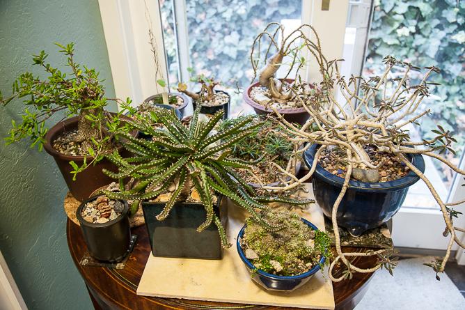 Plants-0410