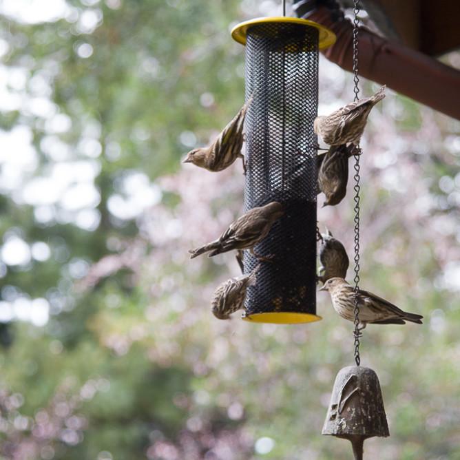Birds-7659