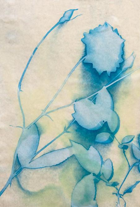 Sunprint 1--2