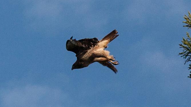 Eagle-1559-2