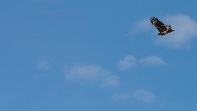 Eagle-1560